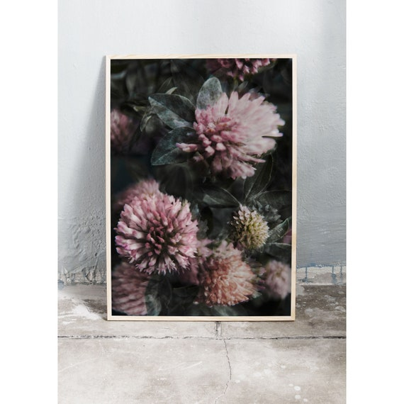 Art photography print of the pink clover flower. Print is printed on a matte, high quality paper.