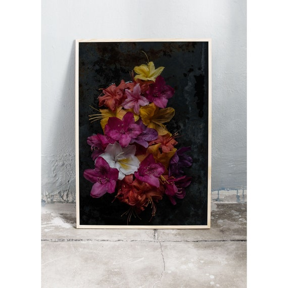 Moody and colourful art photography print of the azalea and rhododendron arranged in a still-life. Printed on a high quality matte paper.