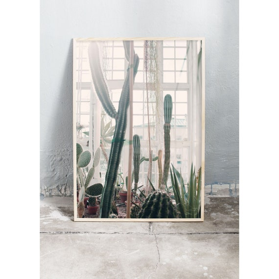 Photography art print in the cactus greenhouse with the green cacti and the white windows. Print is printed on a high quality, matte paper.