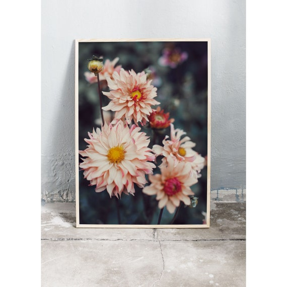 Photography of orange an pink dahlias. The wall art photography print is printed on a high quality, matte paper.