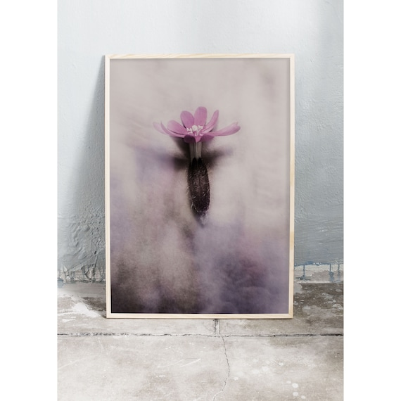 Photography art print of the purple flower red campion. Print is printed on a matte, high quality paper.