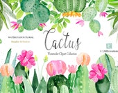 Cactus watercolor clipart, hand made. HEADER FOOTER. Succulent. Jucie colors. Mexica. Aloe Vera.