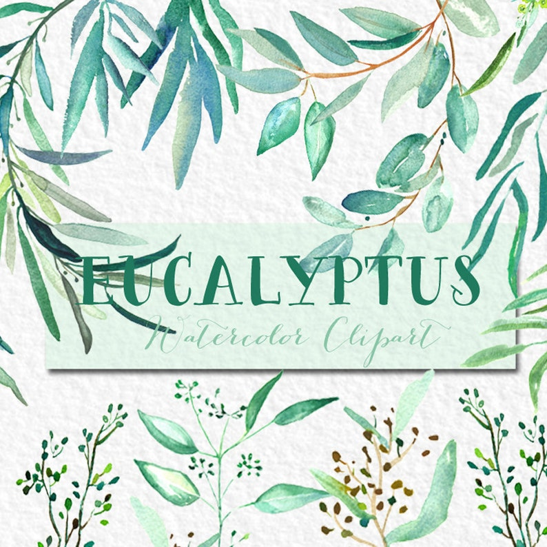 tender green branches Romantic wedding wedding invitation. mint green Eucalyptus  branches watercolor clipart hand drawn