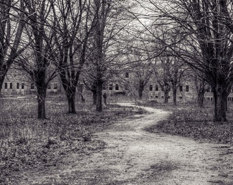 """Path Through the Woods Abandoned Mental Institution & Hospital Complex.  Urbex, Urban Decay Photography 12x24"""""""