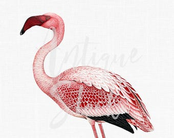Bird Clipart 'Flamingo' Vintage Digital Download Image Pink Flamingo for Crafts, Wall Art, Collages, Transfers, Scrapbooking, Invites...