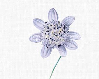 Flower Clip Art 'Lilac Tree Dahlia' Botanical Illustration Digital Download for Prints, Wall Art, Collages, Transfers, Scrapbook, Tattos...