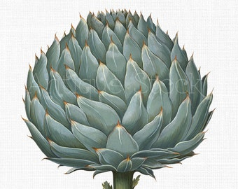 Botanical PNG Image 'Artichoke' Vintage Digital Download for Craft Projects, Wall Art, Collages, Transfers, Design, Scrapbooking...