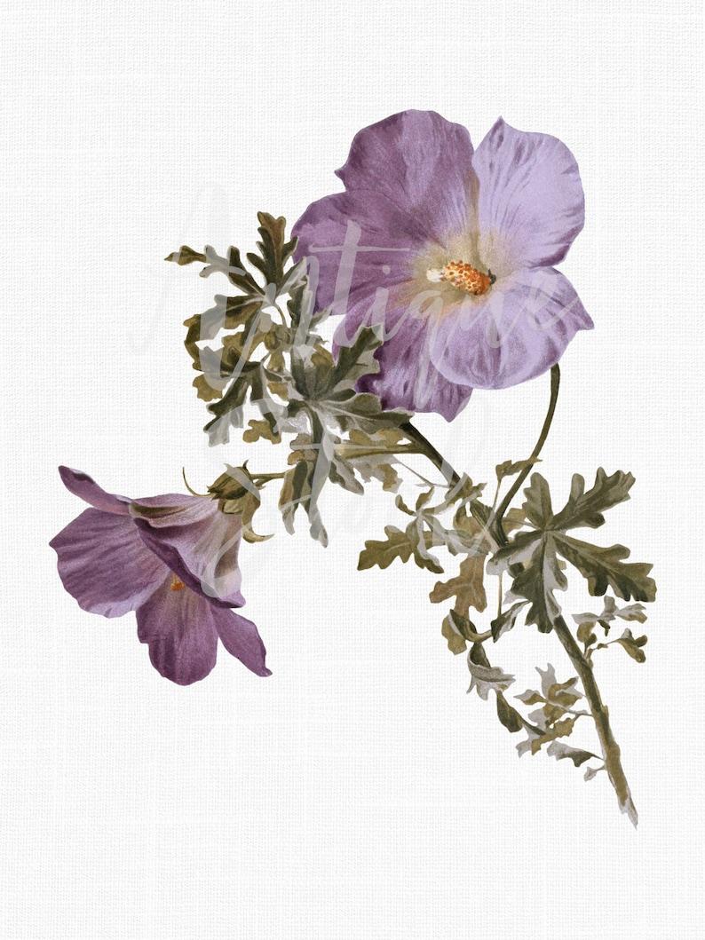 Flower Clipart Lilac Hibiscus Vintage Botanical Etsy