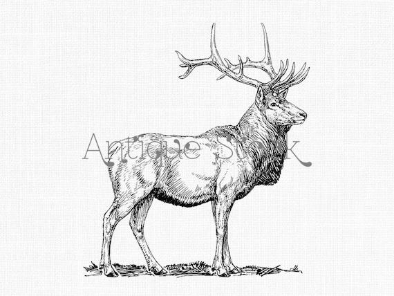 deer digital download elk wapiti line art drawing etsy