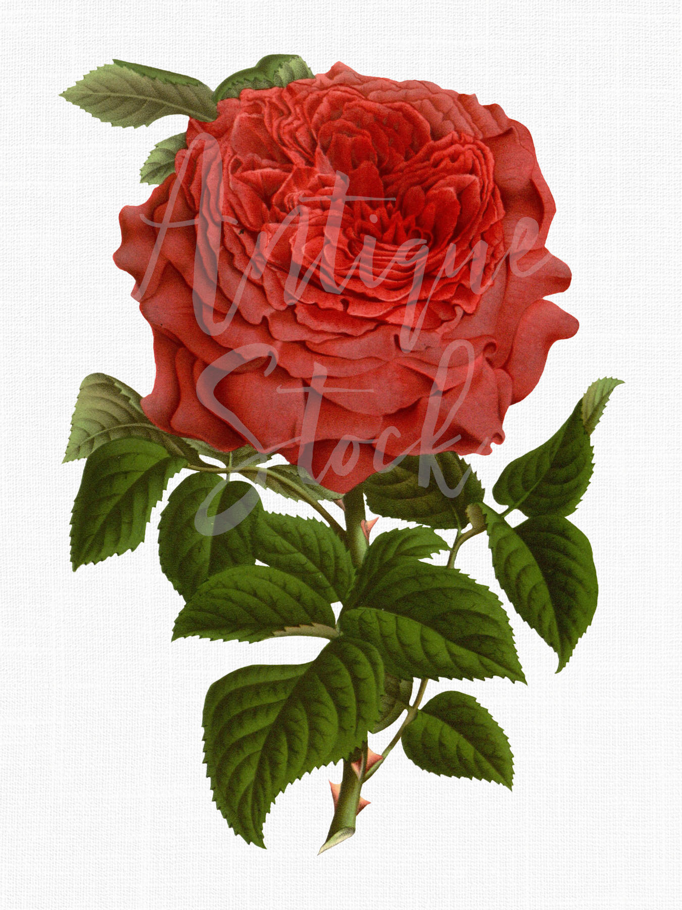 Forum on this topic: Phyllis Love, rosie-perez/
