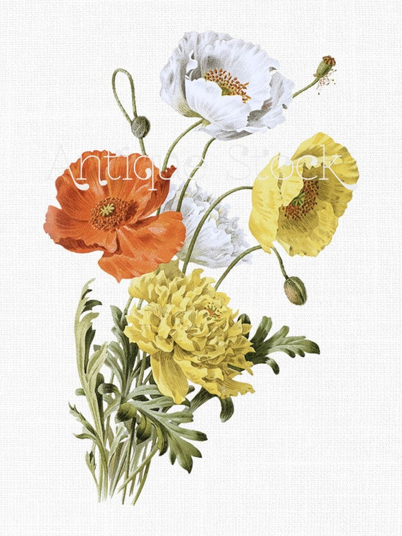 Poppy flower clipart iceland poppies printable etsy image 0 mightylinksfo