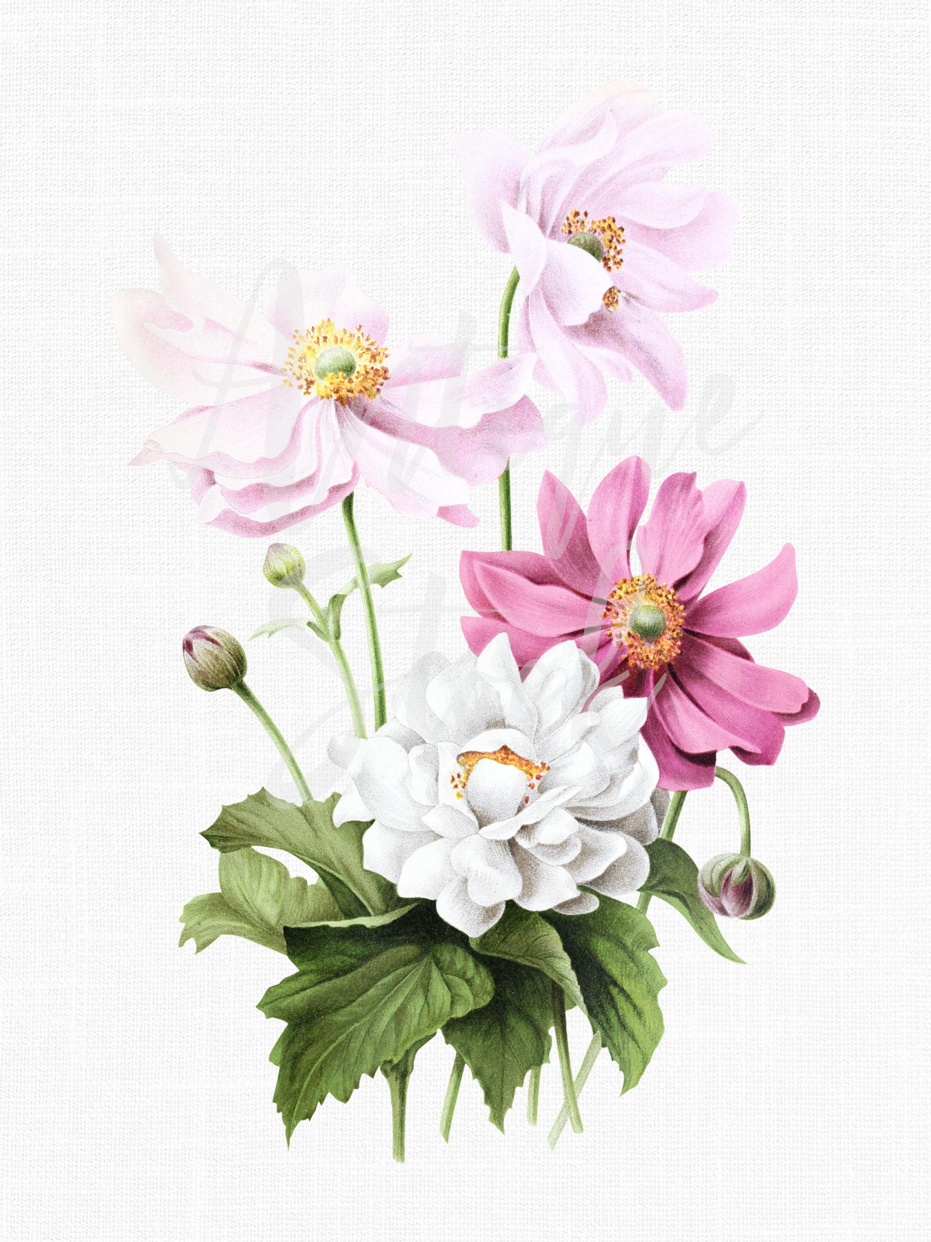 Pink And White Flowers Clipart Japanese Anemones Etsy