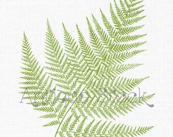 Fern Leaf Clipart 'False Shield-fern' Botanical Illustration Digital Download Image for Wall Art Prints, Scrapbook, Collages, DIY Crafts...