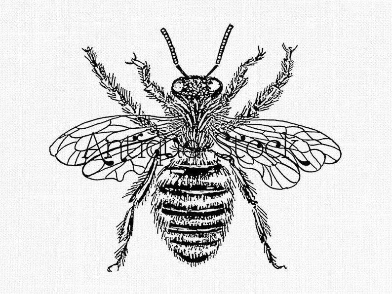 Insect Clipart Queen Bee Line Art Transfer Honey Bee