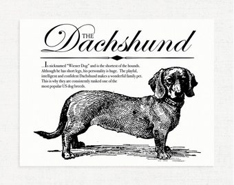 Dachshund (Wiener Dog) - Vintage Inspired Wall Art Home Decor Print With Retro Illustration & Dog Breed Definition - Farmhouse Style Artwork