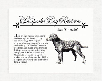Chesapeake Bay Retriever (Chessie) - A Vintage Style Dog Breed Wall Art Print for Dog Lovers With Dictionary Definition & Antique Drawing