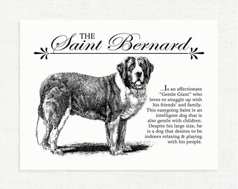 Saint Bernard - Typography Wall Art Print on Canvas Paper With Dog Breed Dictionary Style Definition - Dog Lover Gift - Home Decor - Gift