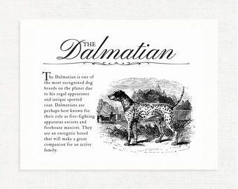 Dalmatian - Typography Wall Art Print on Canvas Paper With Dog Breed Dictionary Style Definition - Dog Lover Gift - Home Decor Artwork
