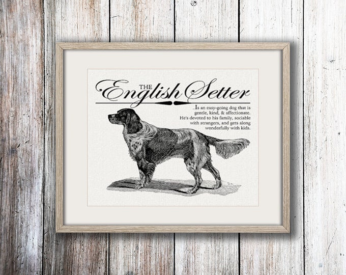 Featured listing image: English Setter - A Retro - Vintage Style Dog Breed Wall Art Print for Dog Lovers With Dictionary Definition & Antique Illustration