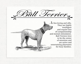 Bull Terrier / Pitbull Wall Art Print With Dictionary Definition & Antique Illustration - Vintage - Retro - Typography