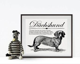 Dachshund (Wiener Dog) - Vintage Inspired Wall Art Home Decor Print With Retro Illustration & Dog Breed Definition - Farmhouse Style Artwork