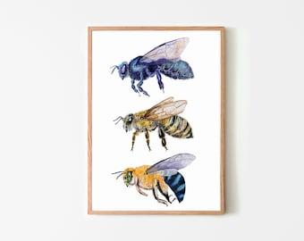 bee's, nature study, bee illustration, nature print, entomology, watercolour art print, watercolour bees, , insect print,