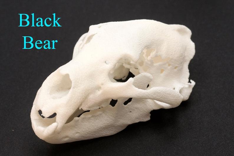 Animal Skull Black Bear Skull 3D Printed Skull Educational