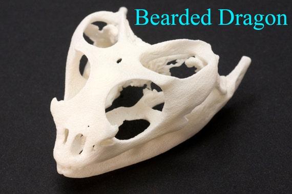 Tierische Schädel Eidechse Skull 3D gedruckte Bartagame Skull