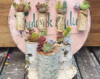 Succulent Cork Magnets and Stand Up Log Set