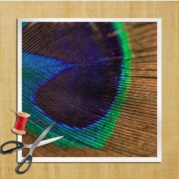 Peacock Feather Bird Photography Cushion Panel Upholstery Etsy