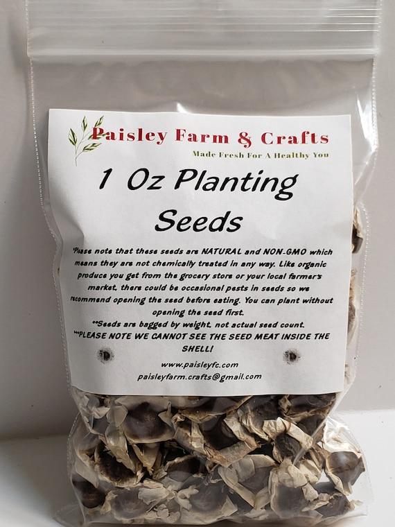 Paisley Farm /& Craft  FromThailand Best Of 100 Moringa Seeds