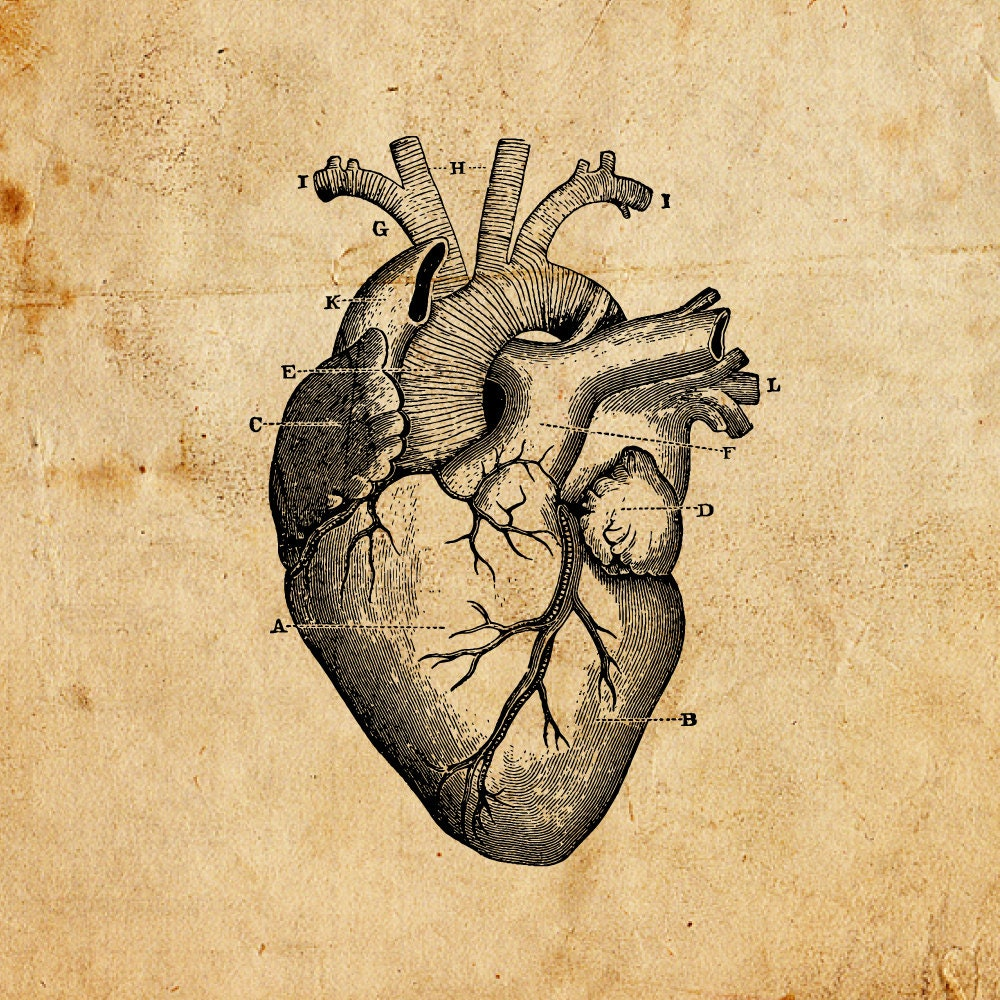 Corazón vintage. Vectoriales PNG JPEG. Descarga digital. | Etsy