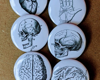 Vintage Inspired Anatomy Print Buttons Set