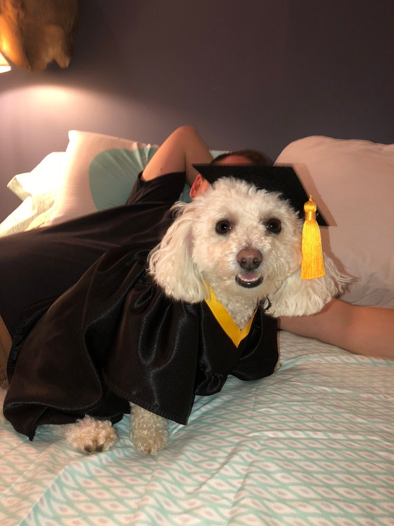 Dog Graduation Cap Gown Therapy Dog Graduation Cap Etsy