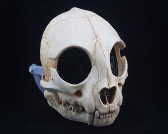 Cat Skull Mask - Full - Bone Painted