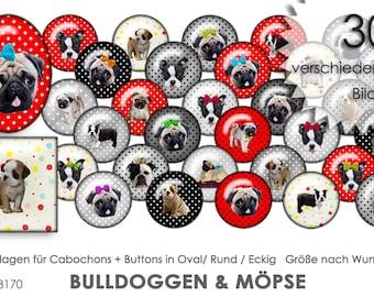 Bulldoggen & Möpse 30 Cabochonvorlagen Cabochon Vorlagen digital Download Buttonvorlagen Bilder für Schmuck Buttons template Collage