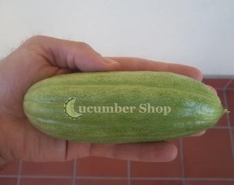 Carosello Scopattizzo Barese Cucumber