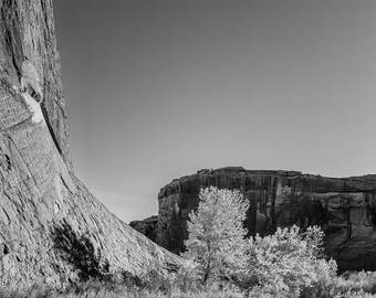 Cottonwoods No. 2, Canyon de Chelly, 2017: A Black and White Photograph 12x15