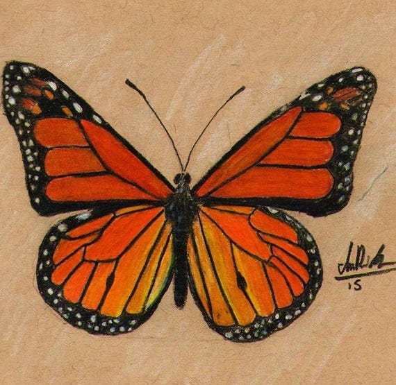 Artículos Similares A Mariposa Monarca Colores Lápiz De Dibujo A