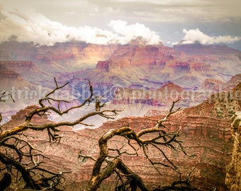 Grand Canyon Photo Fine Art Photography Grand Canyon Arizona Earth Tones Pink Brown Nature Natural Wonders Living Room Bedroom Office Decor