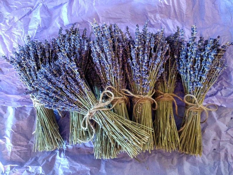 English Lavender bundles bouquets. Petite minis or Regular image 0
