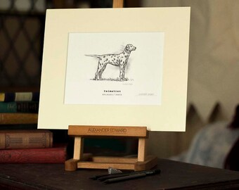 Dalmatian - Beautifully hand-signed print drawing on a light ivory mount frame.