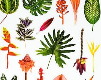 Tropical Plants Sticker Sheet