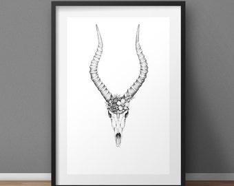 Impala - A3 Print