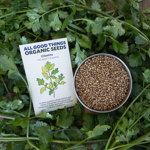 Graines de Coriandre 50 graines Non-OGM