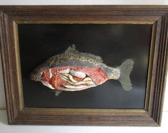 antique anatomical half relief carp botanical model fish framed