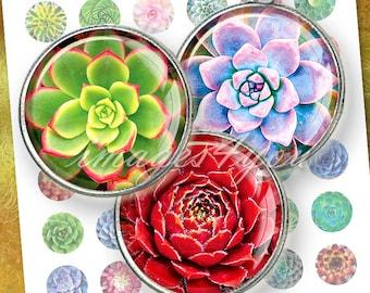 Succulent print cactus art round Digital Collage Sheet download cabochon 20mm 18mm 16mm 14mm 12mm printable circles pendant bottlecap images