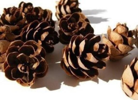 Natural Pine Cones 60Pcs Quality Pinecone/'s Florists Crafts Decorative Cone