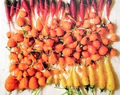 Photo Postcard - Carrot Gradient