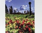 Baby Lettuce & Sky Postcard